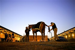 Dortmund is given a bath on the backside of Churchill Downs after morning workouts on the eve of the Kentucky Derby in Louisville, Ky., on Friday. The 141st running of the Kentucky Derby will feature a field of 20 horses.