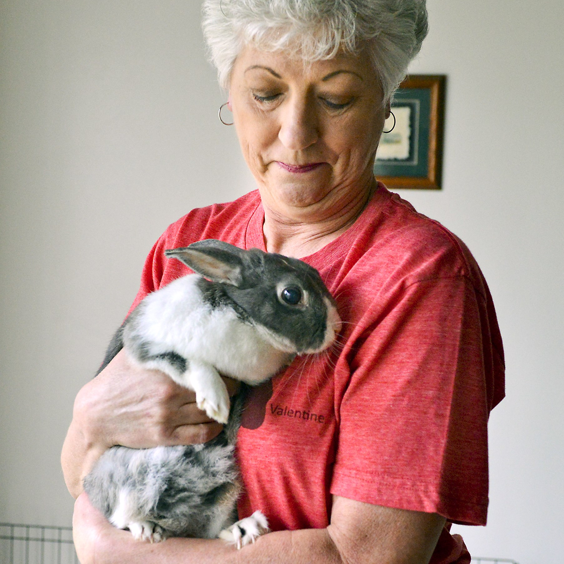Susan Platek has been fostering LuLu, an 11-year-old Dutch mix rabbit since August 2014. LuLu has had many health issues, which makes adoption difficult.