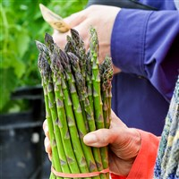 Asparagus is purchased at the Ridgeview Acres Farm stand May 14, the opening day of the farmers market in Market Square.