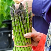 For some people, asparagus makes its presence known with an odor in the diner's urine.