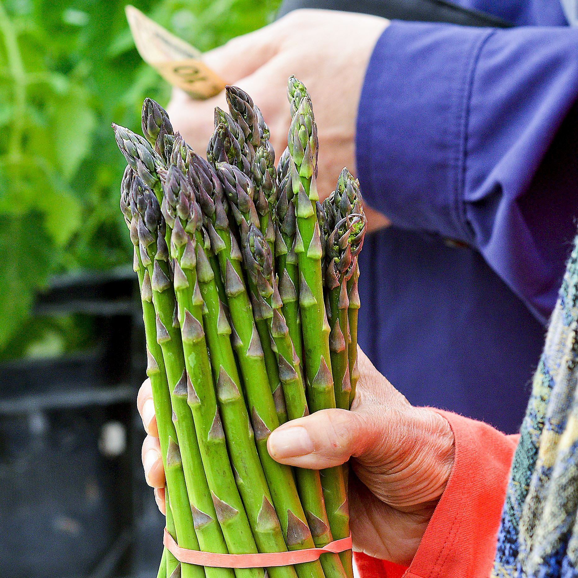 20150514farmersmarketfood04 Asparagus at the Ridgeview Acres Farm stand in Market Square.
