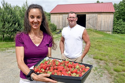 "Janet McKee, with freshly picked strawberries, and farm manager Kevin Keslar have started a ""veganic"" farm on a historic property in Donegal Township, Westmoreland County."