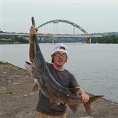 Matt Wolfe of the South Side had his line baited for flatheads when he hooked a 46 ½-inch, 18-pound paddlefish in the Monongahela River. Accidentally snagged and tangled in line, the fish was photographed and quickly released. Native to the Ohio River drainage, paddlefish were extirpated by the early 1900s. In 2003, a restoration program was launched, funded by the U.S. Fish and Wildlife Service. The state Fish and Boat Commission annually stocks paddlefish fingerlings into the Ohio and Allegheny Rivers with a goal of reestablishing a stable breeding population. In Pennsylvania, the paddlefish is no longer listed as threatened or endangered.