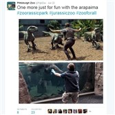 "The Pittsburgh Zoo & Aquarium got into the act of joining the #JurassicZookeepers meme movement as zookeepers around the world began tweeting themselves posed in front of animals as Chris Pratt's character is in front of the raptors of the movie ""Jurassic World."" According to The New York Times, zookeeper enthusiasm may be rooted in the depiction of the human-animal relationship that the character explains, ""It's not about control. It's a relationship based on respect."" The Pittsburgh Zoo tweeted, ""one more just for fun"" with its arapaima, native to South America and among the largest freshwater fish in the world."
