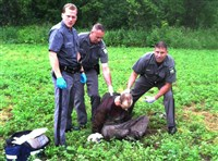 Police stand over escaped convict David Sweat after he was shot and captured near the Canadian border Sunday in Constable, N.Y. Sweat is the second of two convicted murderers who staged a brazen escape three weeks ago from a maximum-security prison in northern New York. His capture came two days after his escape partner, Richard Matt, was shot and killed by authorities.