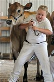 Emma Bowser, 10, holds back 700-pound Jersey cow Rapunzel, from entering the judging ring too early. Rapunzel, from Rocky Maple Farm in Slippery Rock, went on to win two blue ribbons.  This year's fair opens Friday and runs through July 11.            Original Filename: 20140701radButlerFairLocal0.1.jpg