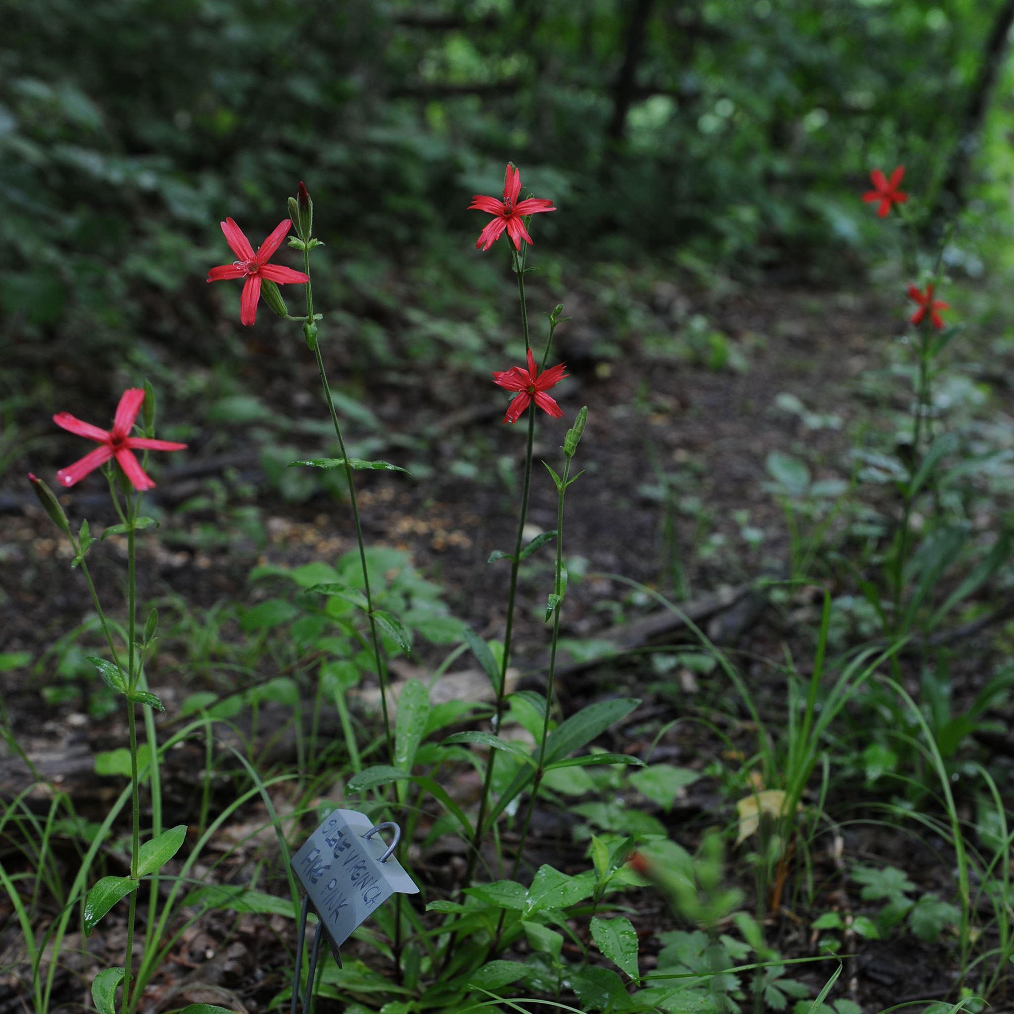 Native Pa Plants: Native Plants The Stars Along Powdermill Reserve's Trails