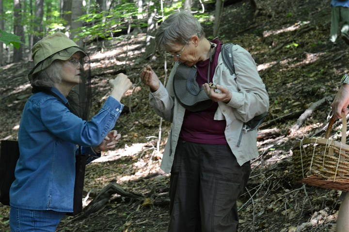 20150711ppMushrooms7MAG-13 Cecily Franklin and Kathy Chaparro team up to identify a mushroom during the Western Pennsylvania Mushroom Club sponsored mushroom walk in Salamander Park in Fox Chapel.