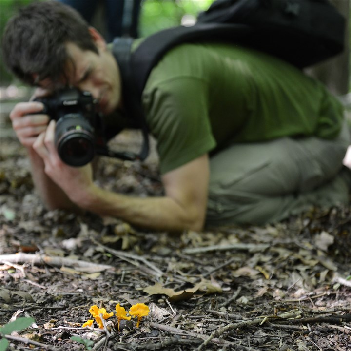 20150711ppMushrooms3MAG-9 Brian Johanson of Ross gets in close to photograph miniature chanterelles in Salamander Park in Fox Chapel.