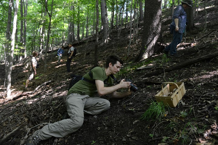 20150711ppMushrooms8MAG-14 Brian Johanson of Ross takes photos of mushrooms while others stroll a hillside looking for mushrooms in Salamander Park in Fox Chapel during a Western Pennsylvania Mushroom Club walk on July 11.