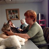 Katie Tontala demonstrates a cat massage technique at the Western Pennsylvania Humane Society.