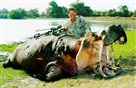 Dr. Jan Seski with a hippopotamus he killed during one of his big game hunting trips.