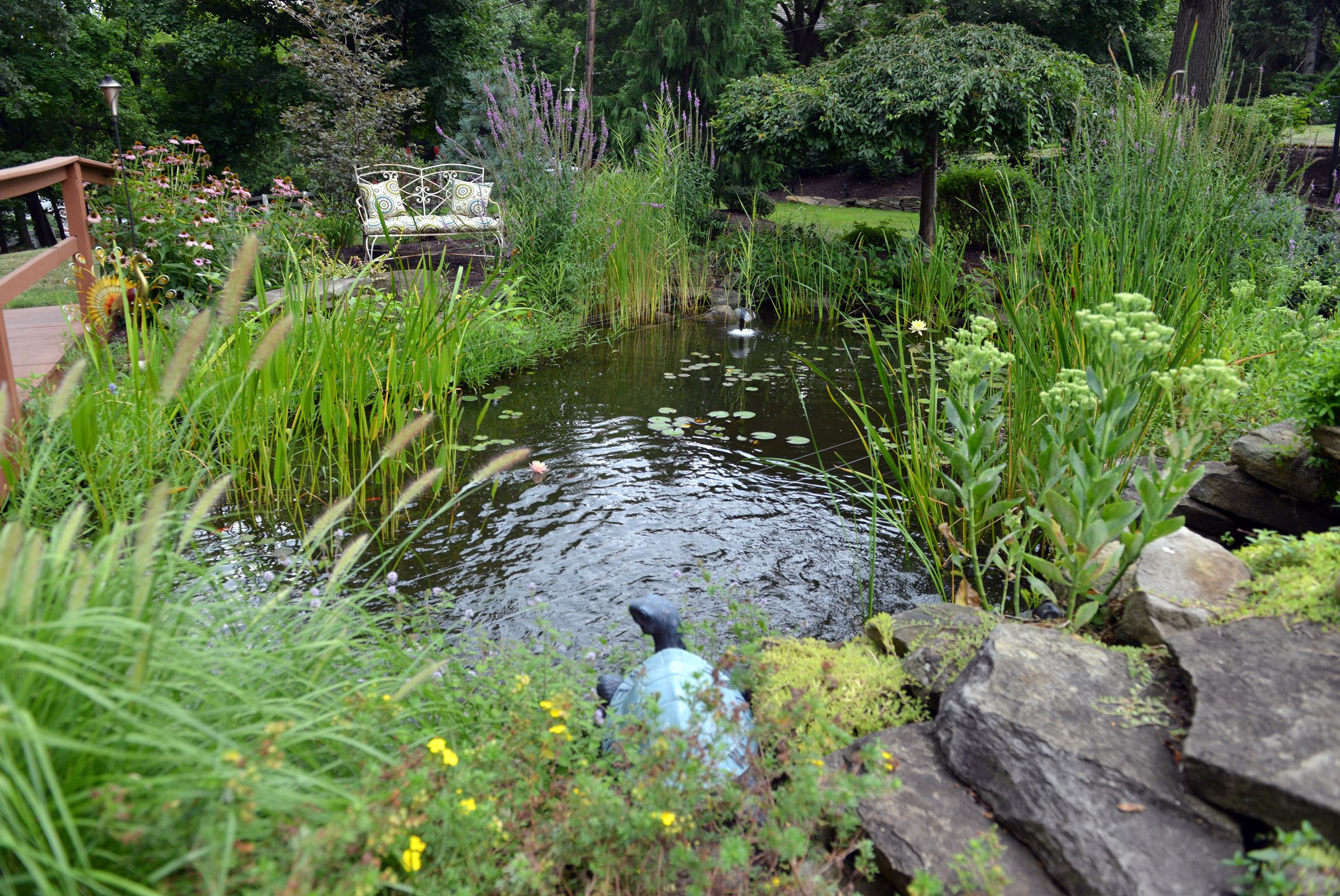 Going big creates a watery oasis in a bethel park backyard for Koi gazette