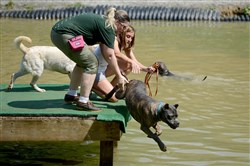 Trainer Kelly Grace, in green, and owner Abbey Schram of Moon Township give a gentle push to Primo, Schram's 9-month-old cane corso, during a swimming lesson for dogs at Misty Pines Dog Park in Franklin Park.