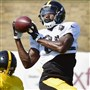 Wide receiver Darrius Heyward-Bey brings in a catch during Steelers training camp in Latrobe last month.