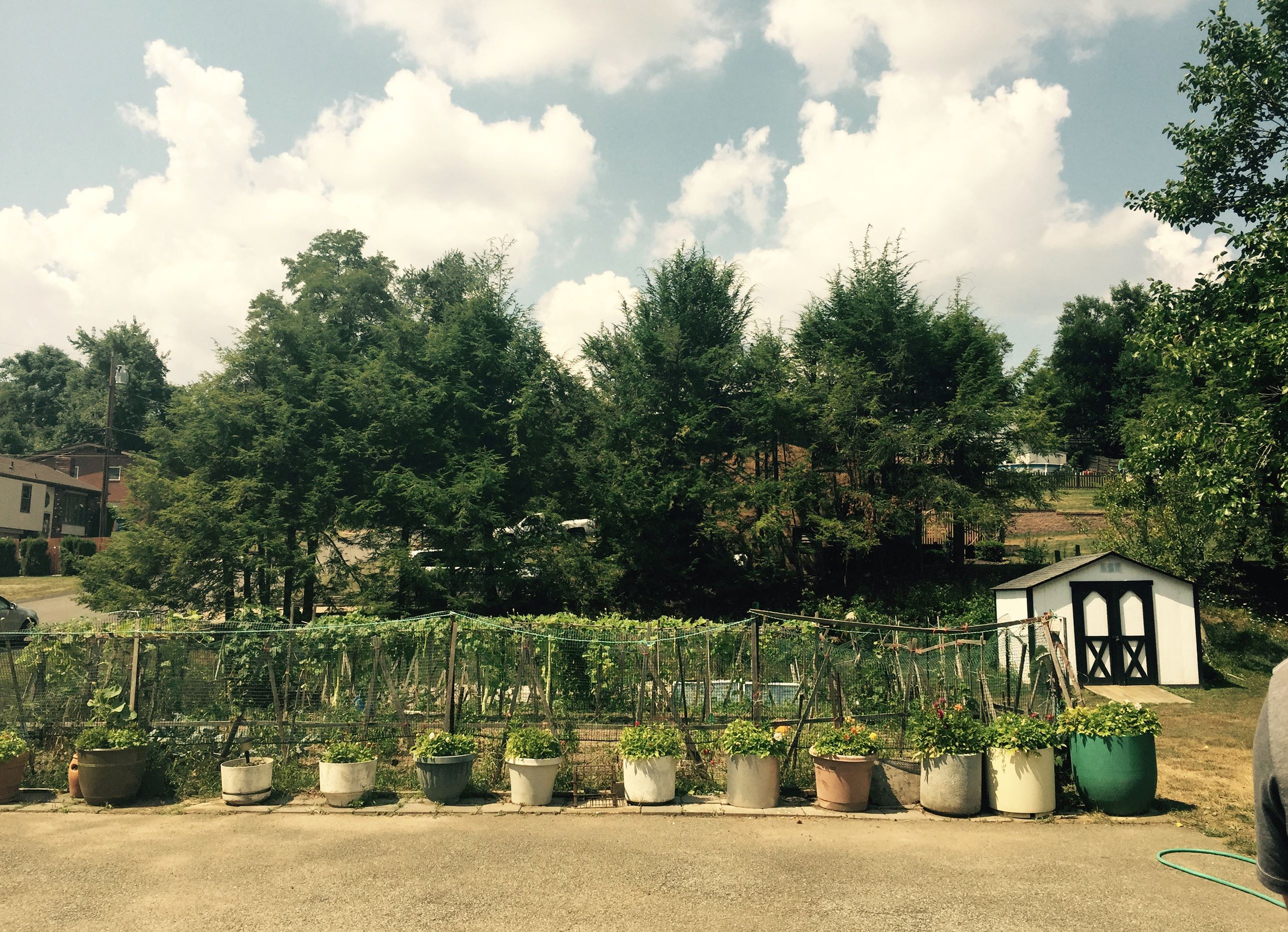 ItaliangardenF-5 Antonio Manti's garden in Shaler.