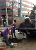 Workers replace a tree near PNC Park on Federal Street in the spring.