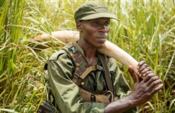A Garamba National Park ranger carries an ivory tusk retrieved from a newly poached elephant.