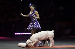 "Mariya Surnana Klose works with Roscoe the pig in the Klose's mixed animal act for the Ringling Bros. and Barnum & Bailey Circus ""Legends"" show at Consol Energy Center."