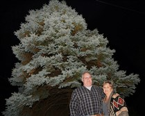 Joe and Kim Butler of McCandless on Friday stand beside the tree they planted in 1989 at their former Brighton Heights home. The current owner of the home donated the tree to be Pittsburgh's official Christmas tree this year outside the City-County Building, Downtown.