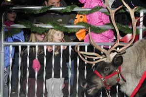 Genevieve Reinard, 4, of Brookline, waits for a reindeer to be within petting distance at the CBS Pittsburgh and Duquesne Light 17th annual Santa Spectacular at Point State Park on Light Up Night.