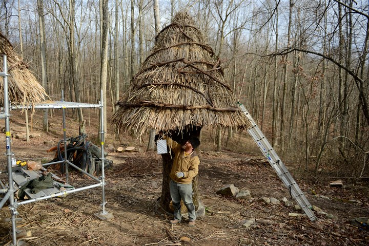 20151123MWHthatcherLocal02-4 William Cahill, a thatcher who was born and trained in Galway, Ireland, used vines removed from trees at the Pittsburgh Botanic Garden to add a decorative and functional touch to thatch roofs on huts made from a downed 227-year-old white oak.