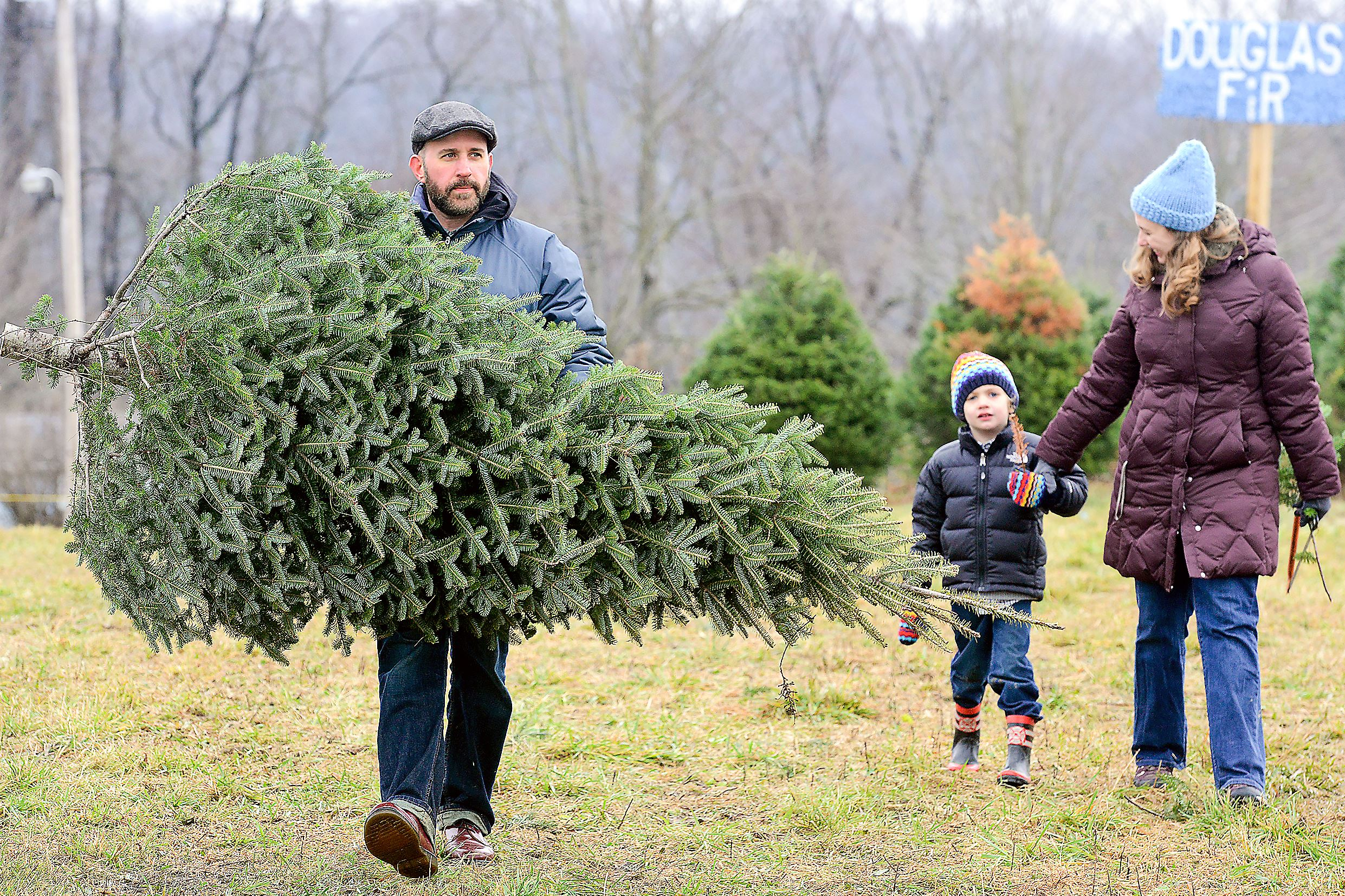 Take A Bough: Check Out These Christmas Tree Farms In The