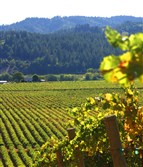 Dry Creek Valley vineyards in Sonoma County, Calif.
