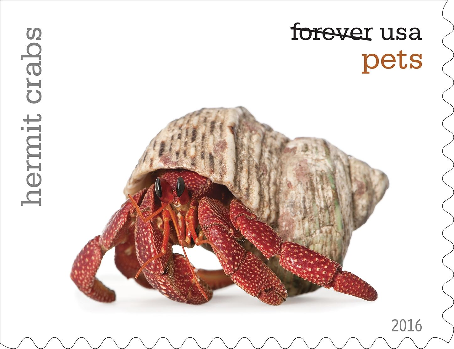 10-0_USPS16STA004k-2 Hermit crabs will be among the pets celebrated in an upcoming set of Forever stamps issued by the U.S. Postal Service.