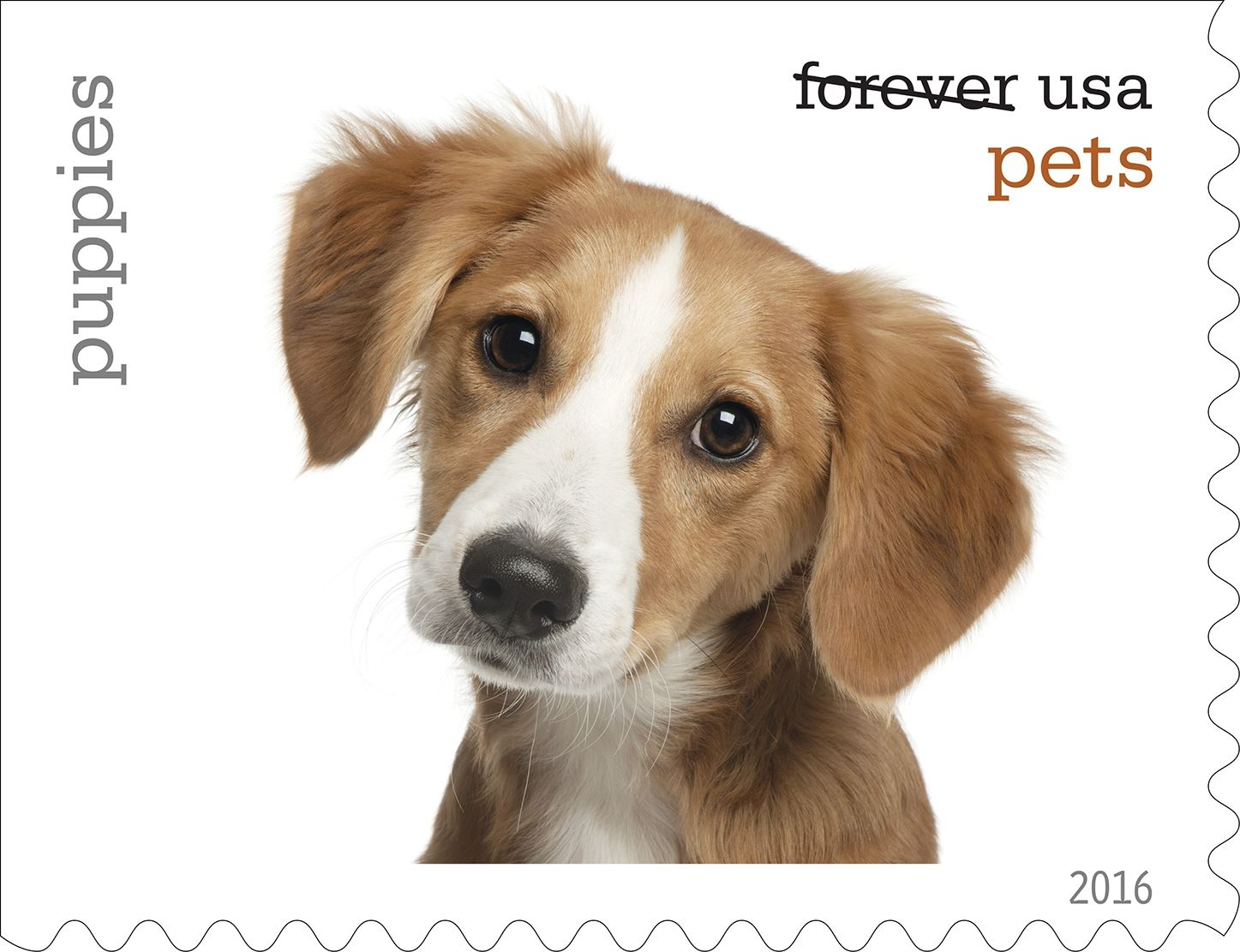 17-0_USPS16STA004r-7 Puppies will be among the pets celebrated in an upcoming set of Forever stamps issued by the U.S. Postal Service.
