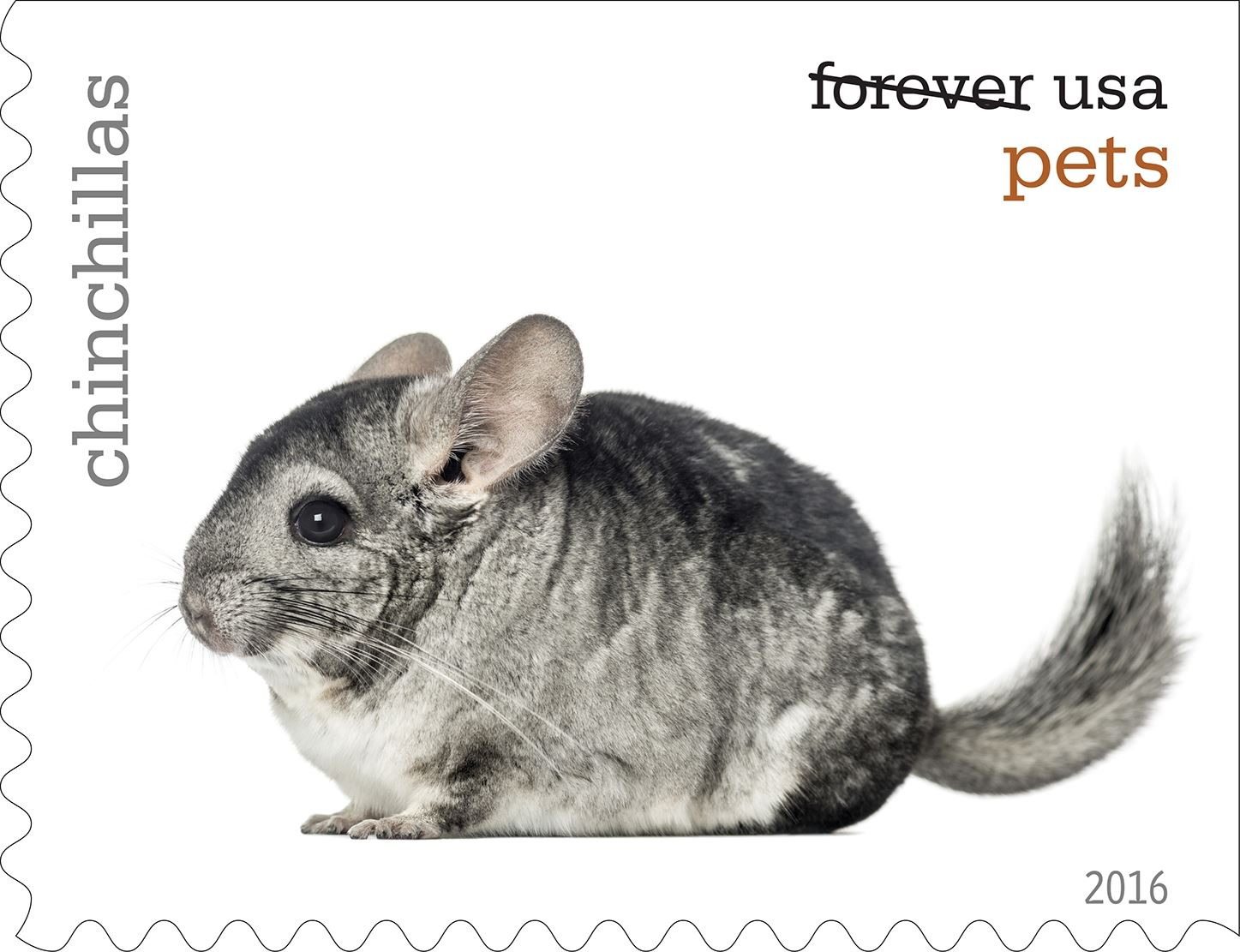 2-0_USPS16STA004c-10 Chinchillas will be among the pets celebrated in an upcoming set of Forever stamps issued by the U.S. Postal Service.