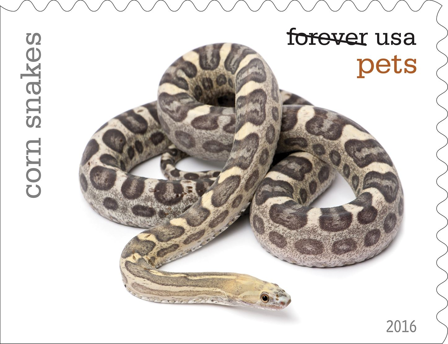 3-0_USPS16STA004d-12 Corn snakes will be among the pets celebrated in an upcoming set of Forever stamps issued by the U.S. Postal Service.