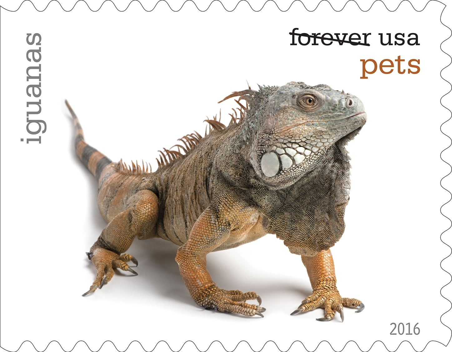 12-0_USPS16STA004m (1)-3 Iguanas will be among the pets celebrated in an upcoming set of Forever stamps issued by the U.S. Postal Service.