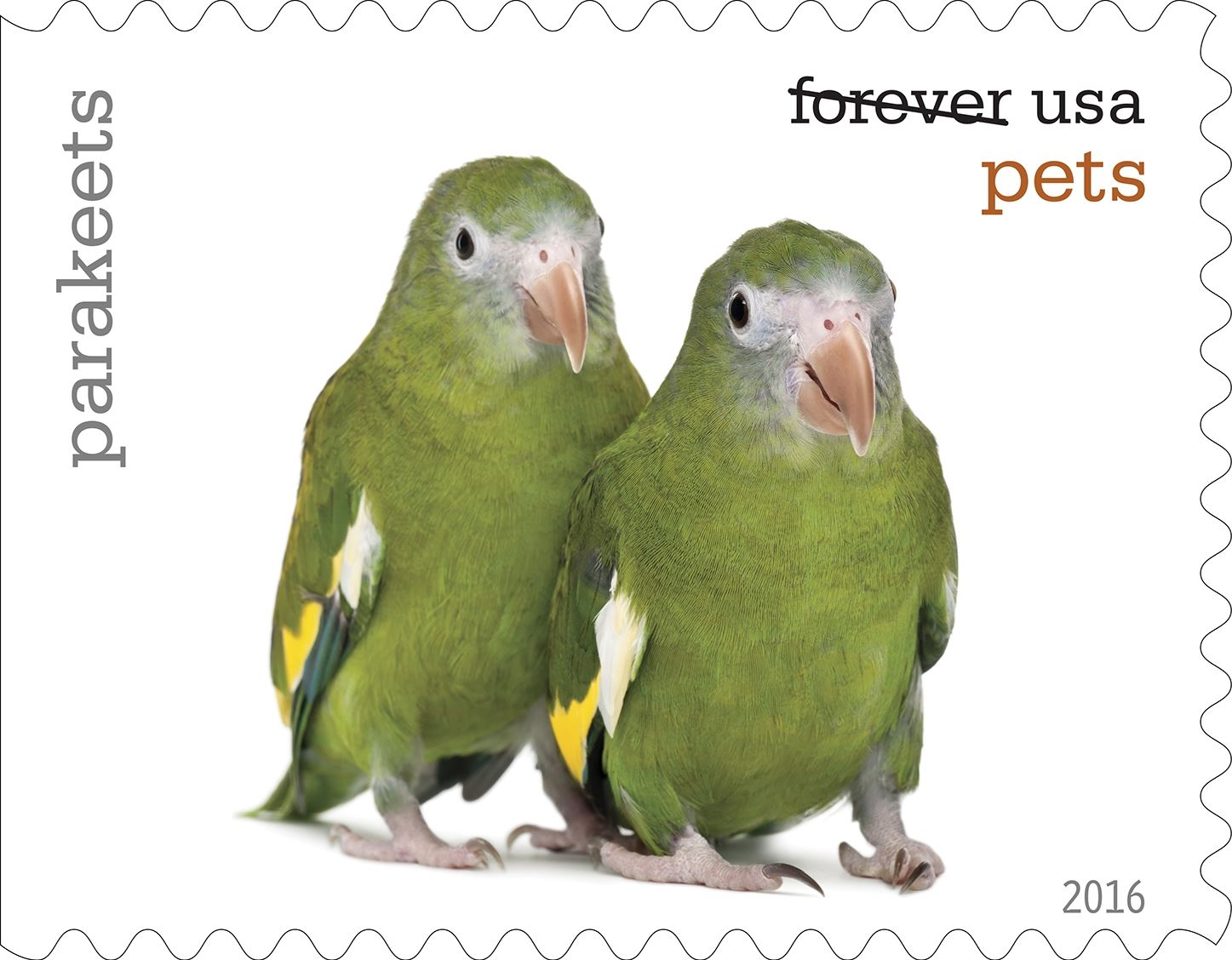 15-0_USPS16STA004p-5 Parakeets will be among the pets celebrated in an upcoming set of Forever stamps issued by the U.S. Postal Service.