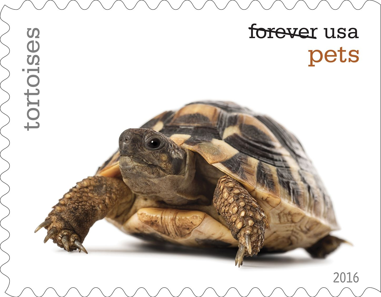 19-0_USPS16STA004t-9 Tortoises will be among the pets celebrated in an upcoming set of Forever stamps issued by the U.S. Postal Service.