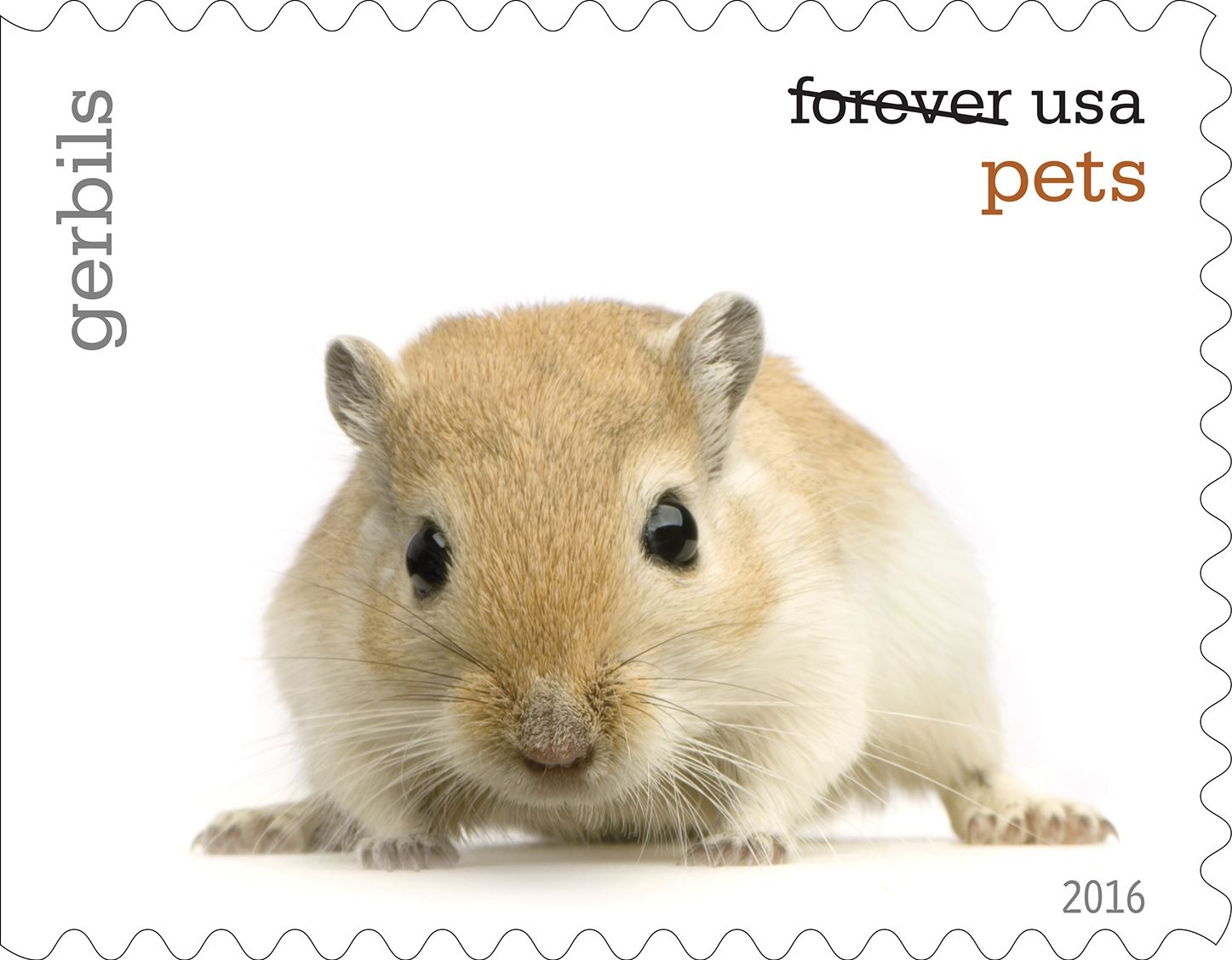 6-0_USPS16STA004g (2)-16 Gerbils will be among the pets celebrated in an upcoming set of Forever stamps issued by the U.S. Postal Service.