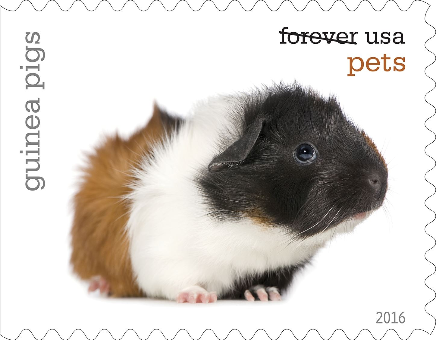 8-0_USPS16STA004i-17 Guinea Pigs will be among the pets celebrated in an upcoming set of Forever stamps issued by the U.S. Postal Service.