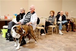 Oscar, a American Bulldog that works as a therapy dog for Healing Hearts, is petted by Bill Harris and his wife Bea during a presentation at LifeSpan's new senior center.