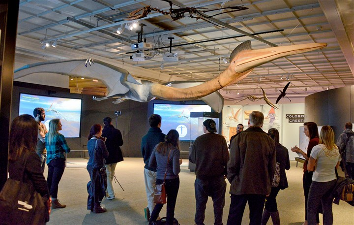 20160128dsPterosaur0129Local07-6 Visitors look up at a life-size model of a Quetzalcoatlus Northrop, which is 30 feet long and has a wingspan of 30 feet, at the new Pterosaur display Friday at the Carnegie Museum of Natural History. Some of the fossels were found at the Big Bend Nationa Park in Texas.
