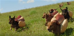 A screen shot of the Kraft Heinz Super Bowl ad featuring a stampede of dachshunds dressed as hot dogs.