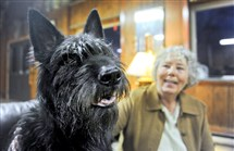 Jackie Walker of Indiana Township and Garcon, her 4-year-old berger Picard are headed to New York City for the Westminster Kennel Club show.