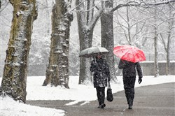 Pedestrians break out the umbrellas during today's snowfall on Schenley Drive in Pittsburgh's Oakland neighborhood.