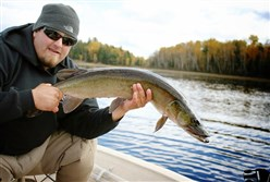 Musky Fly Rod World Champion Todd Deluccia released this monster muskullunge.