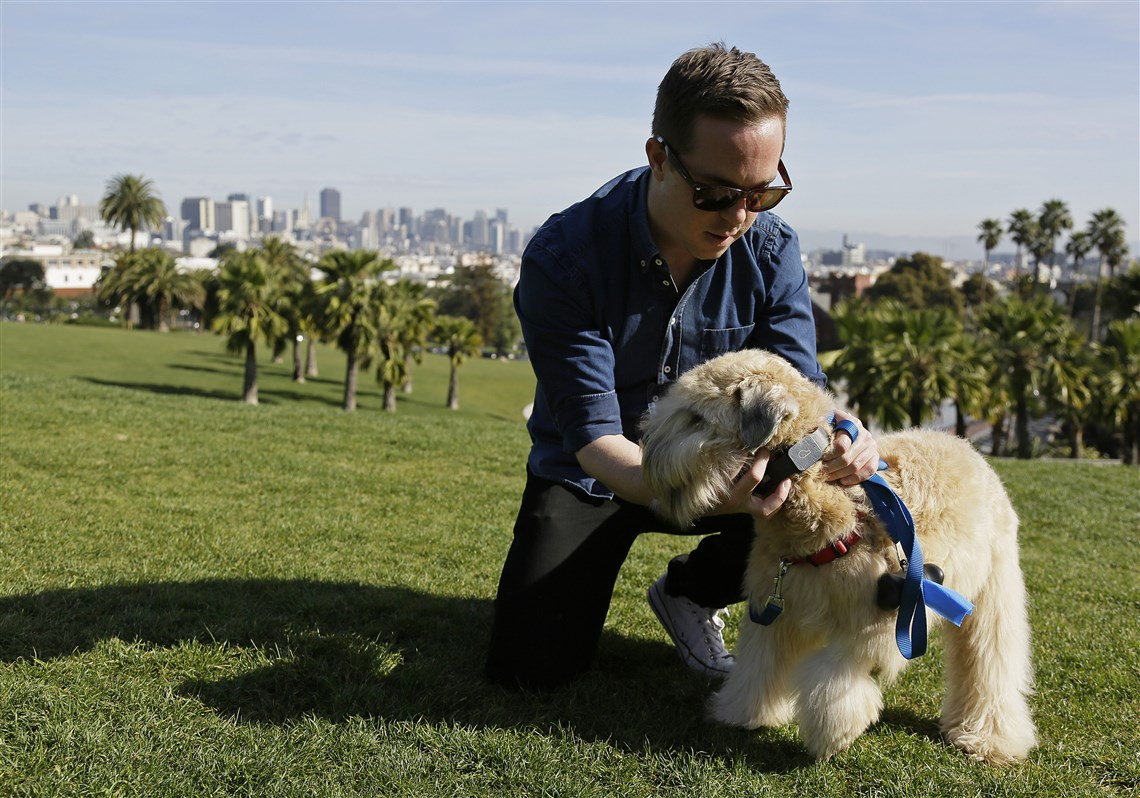 In this Wednesday, Feb. 24, 2016 photo, Russell Gipson Shearer displays the Whistle pet tracker, a GPS-enabled device, on his dog Rocket at Dolores Park in San Francisco. Technology isn't just for humans. It's also for their furry friends. In Silicon Valley and beyond, a growing number of