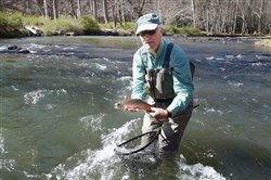 Fly fishing instructor Bill Nagle released this brown trout at Penn's Creek, Snyder County.