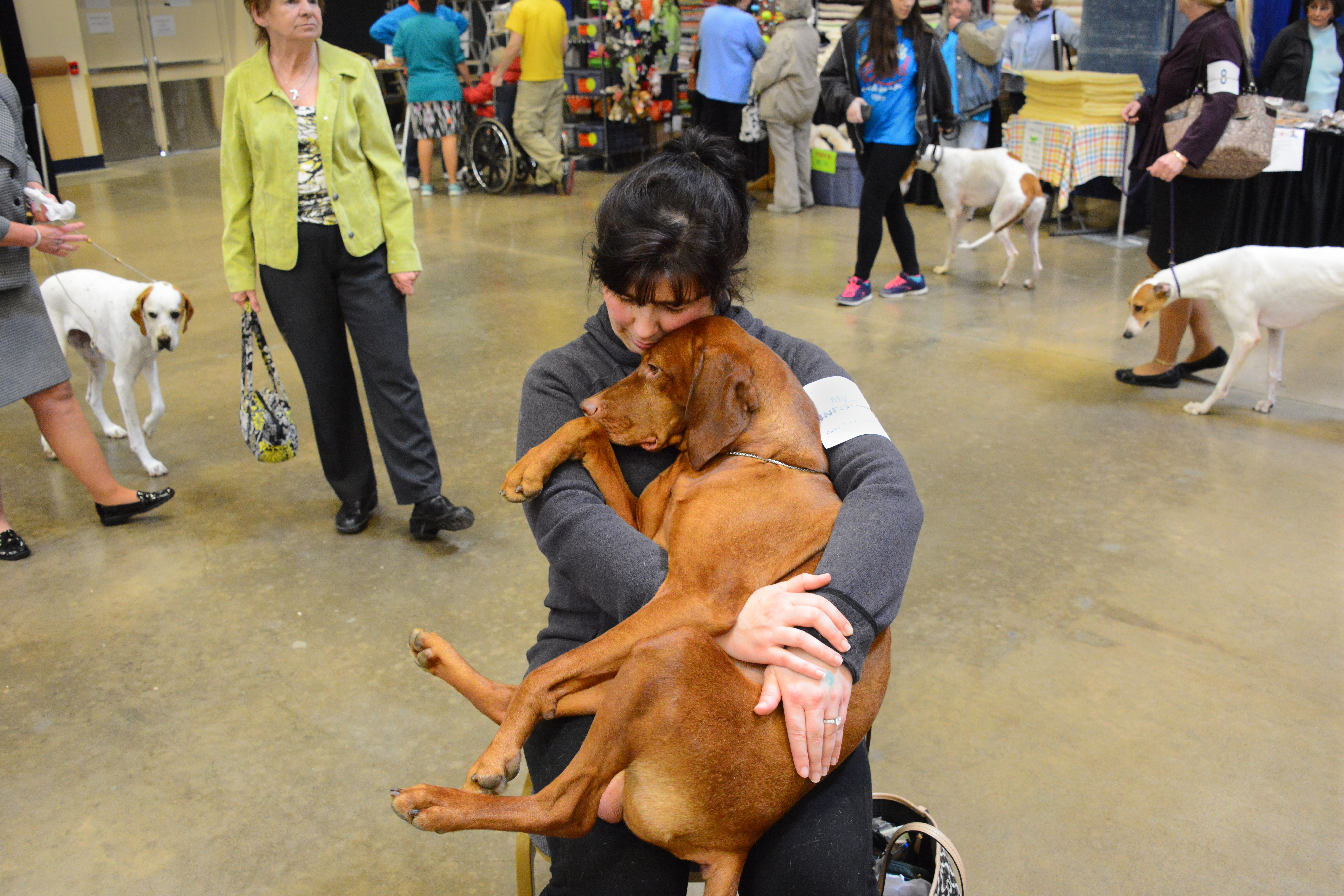 Rigby, a 4-year-old vizsla, rests on the lap of his owner, Kim Swendsen, after winning the Winner's dog and Best of Winners categories at the Western Pennsylvania Kennel Association dog show at Monroeville Convention Center last Saturday.