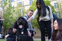 Aldo, a 5-year-old Labradoodle, sits calmly as students pet him on the campus of Carnegie Mellon University in Oakland. Aldo and the students were participating in the Paws to Relax pet therapy program.