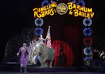 The ordinance would ban the use of wild animals in performances, meaning the show may not go on here for Ringling Bros. and Barnum + Bailey and the Shrine Circus.