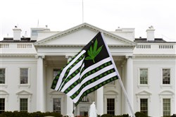 In this April 2, 2016, file photo, a demonstrator waves a flag with marijuana leaves on it during a protest calling for the legalization of marijuana outside of the White House in Washington, D.C.