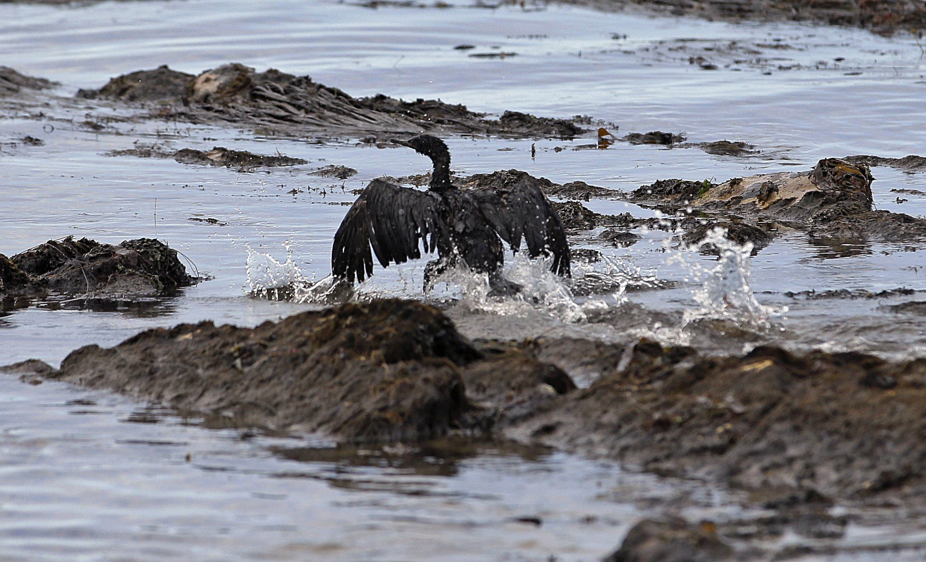 Texas' Plains All American Pipeline indicted for California oil spill